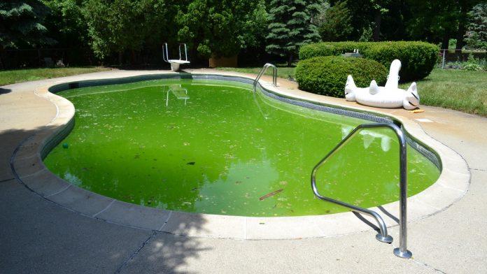 Eau de piscine verte